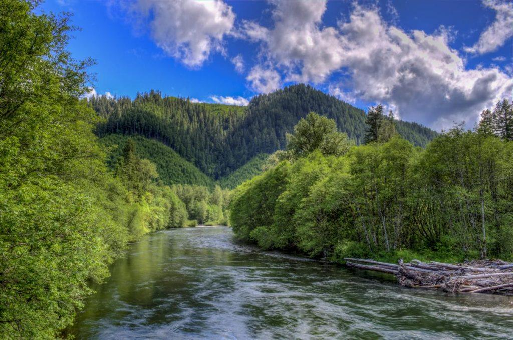 McKenzie River Daytime by Mike Shaw - RIGHTS FREE