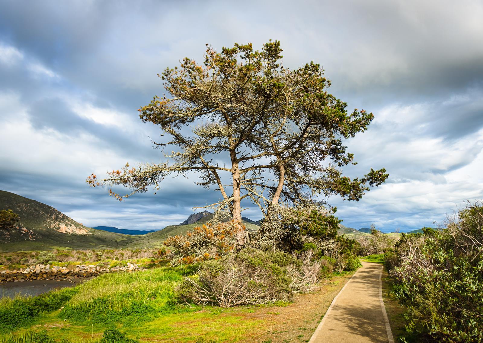 Morro Bay State Park by Danna Dykstra Coy