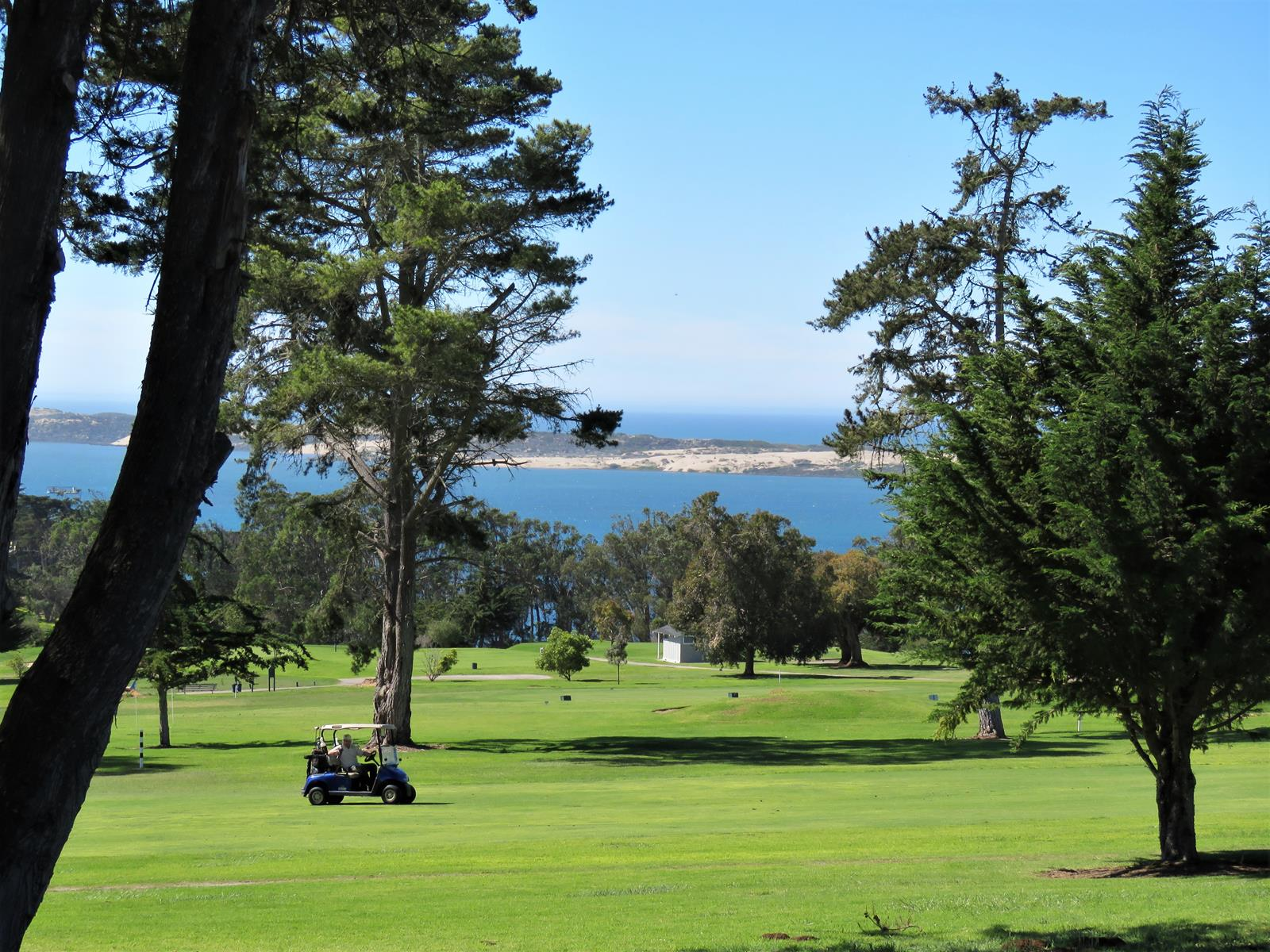 Morro Bay Golf Course 2 by Cindy Shanks
