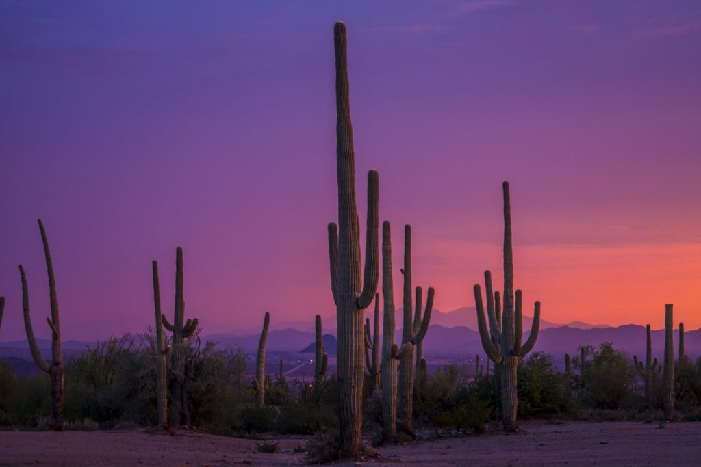 4b.Saguaro National Park
