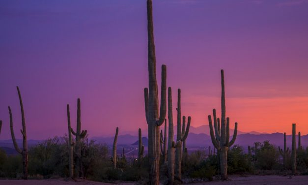 Sunny Tucson Puts Tournament Planners and Athletes in a Great Mood