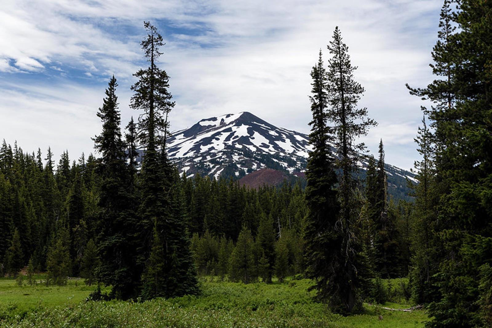 Through trees at Todd Lake, Central Oregon.